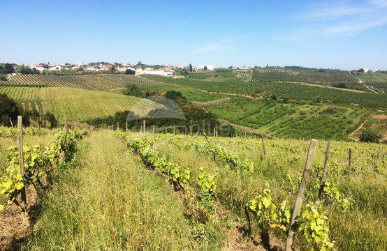 3003 | Propriedade com 12,5ha em aldeia perto de Bombarral e Óbidos